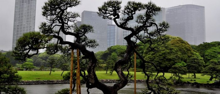 A view of a tree in park against a city scape.