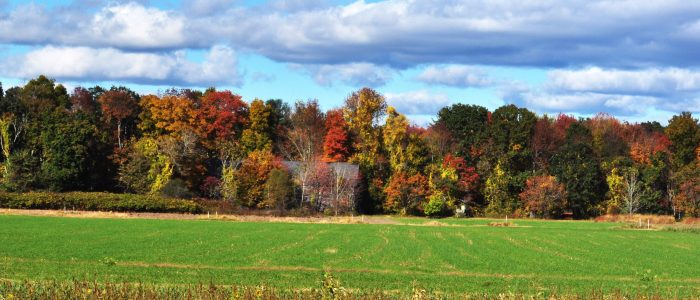 A view of a Connecticut tree line in fall.