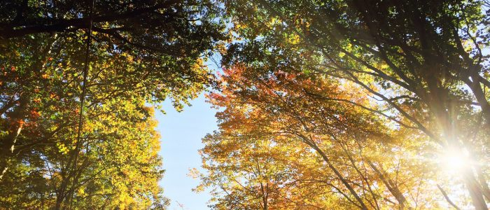 Sunshine coming through trees bright with fall foliage.